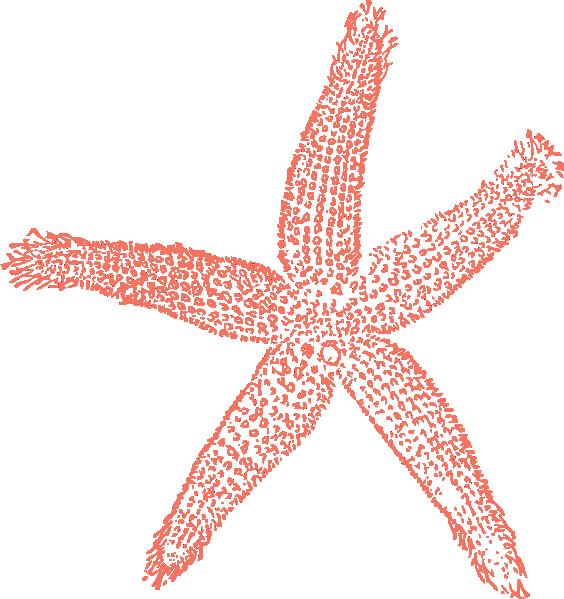 Colors clipart coral. Calypso starfish clip art