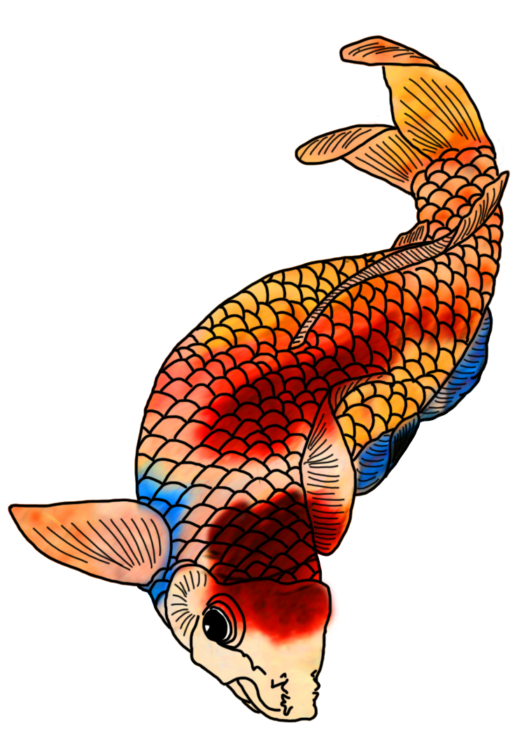 Colors clipart draw. Colorful koi fish drawings