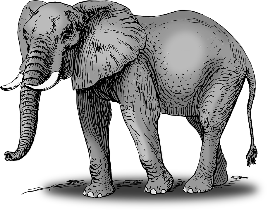 But i wanna be. Colors clipart elephant
