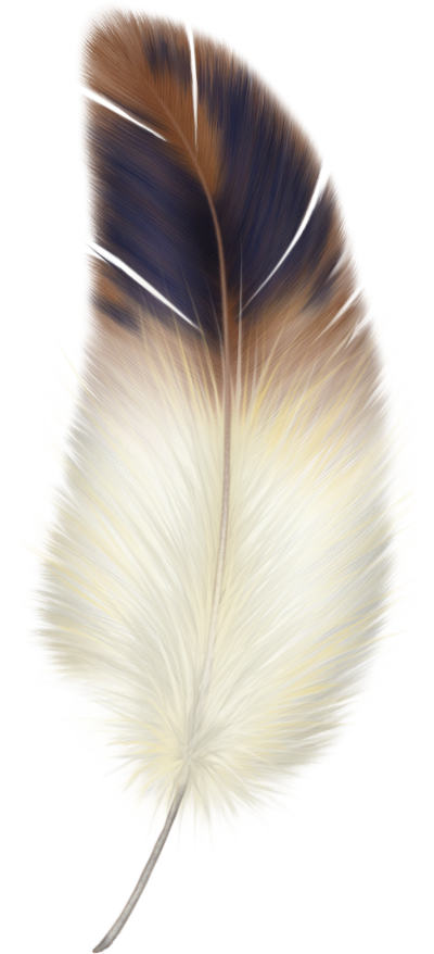Feather clipart animal. Download free png transparent
