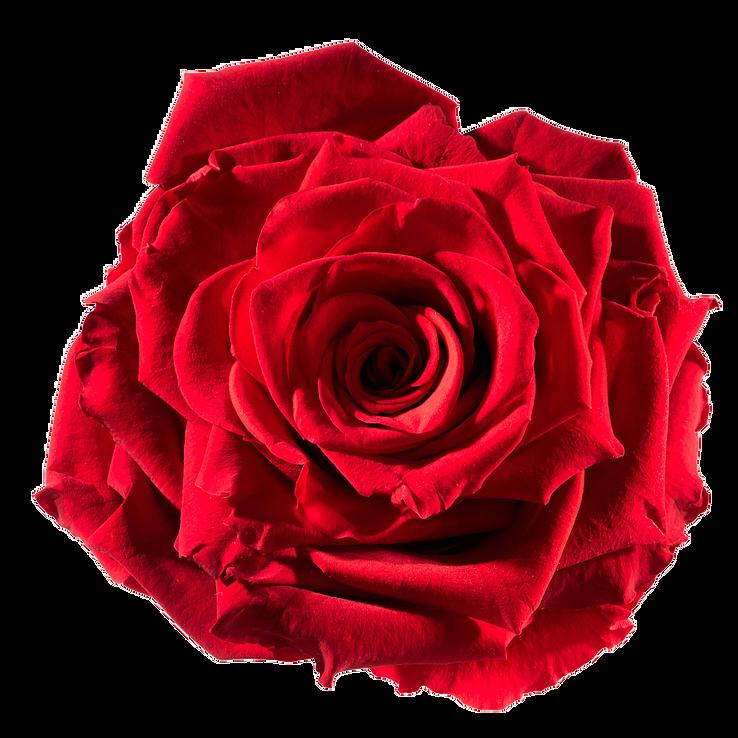 Unique gifts for women. Colors clipart flower
