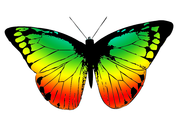 Wing clipart colorful. Butterfly with many colors