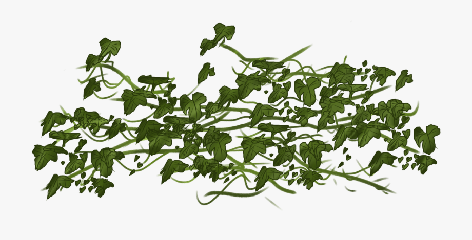 Ivy clipart vine. Vines portable network graphics