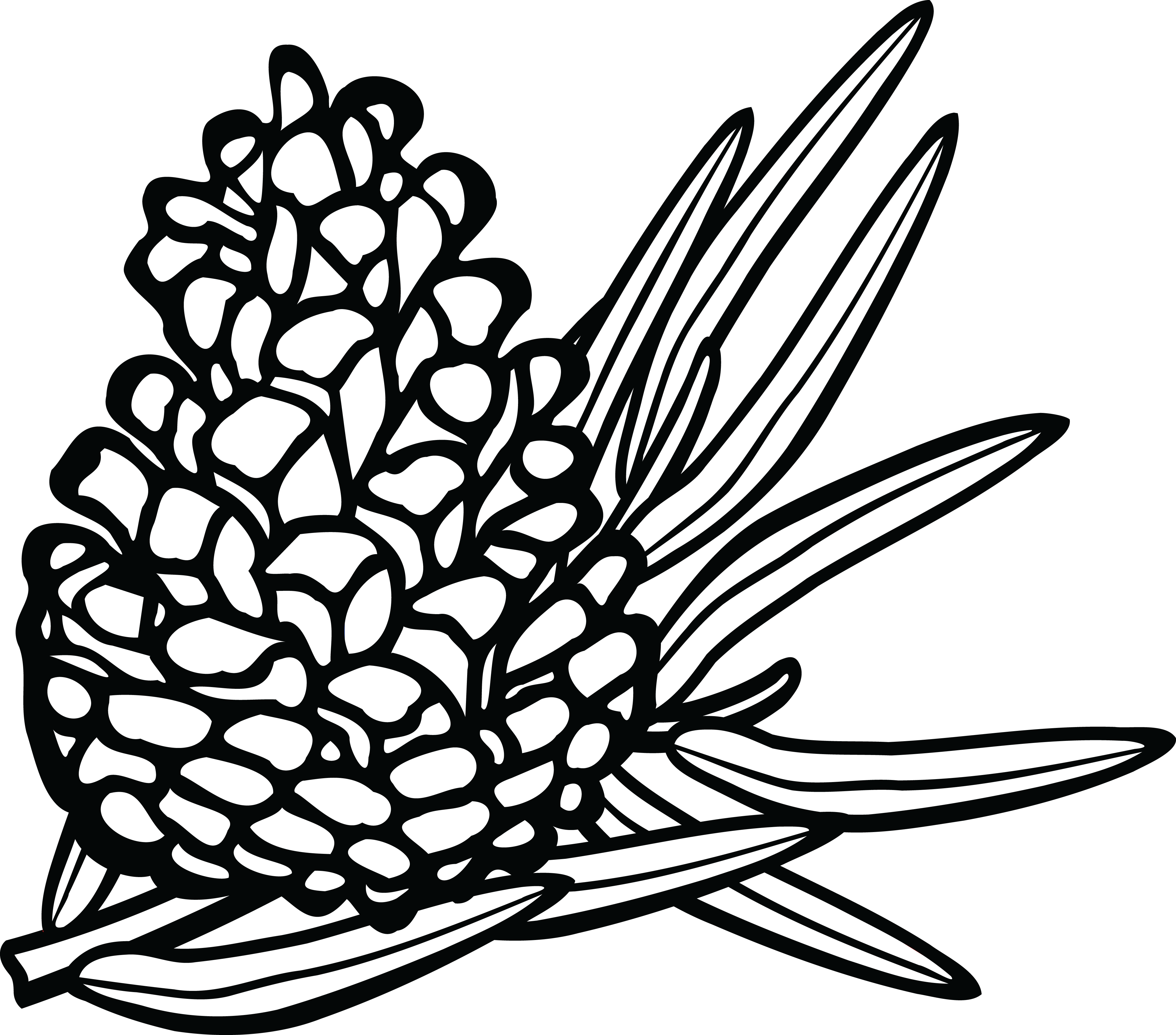 Winter clipart pinecone. Pine cone line drawing