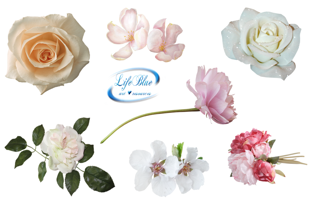 Beautiful flowers by lifeblue. Flower png deviantart