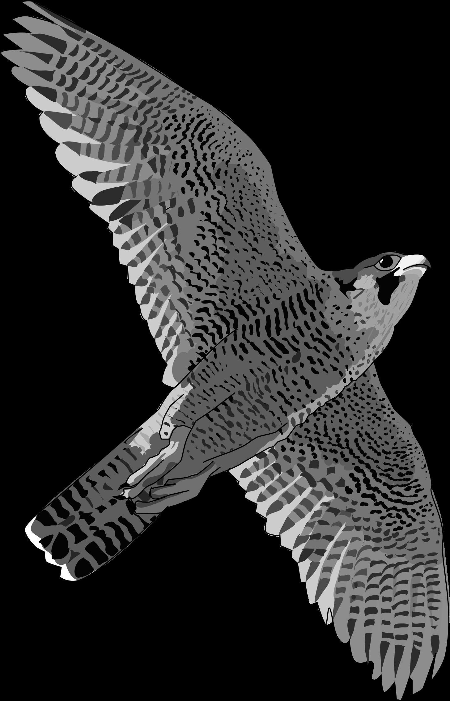 Falcon clipart cool. Clipartblack com animal free