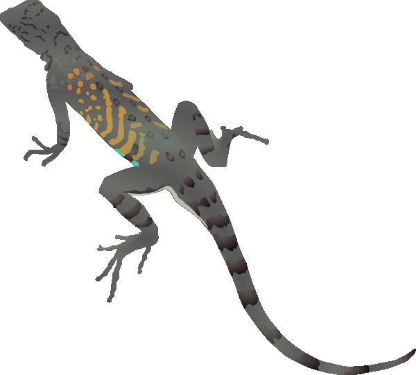 Clip art at clker. Lizard clipart drawn