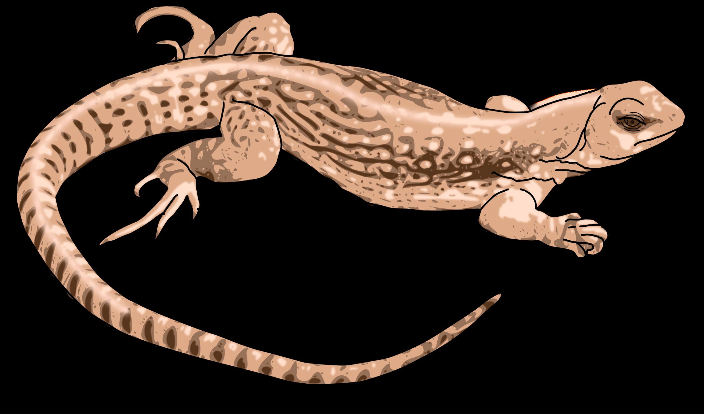 Lizard. Gecko clipart svg