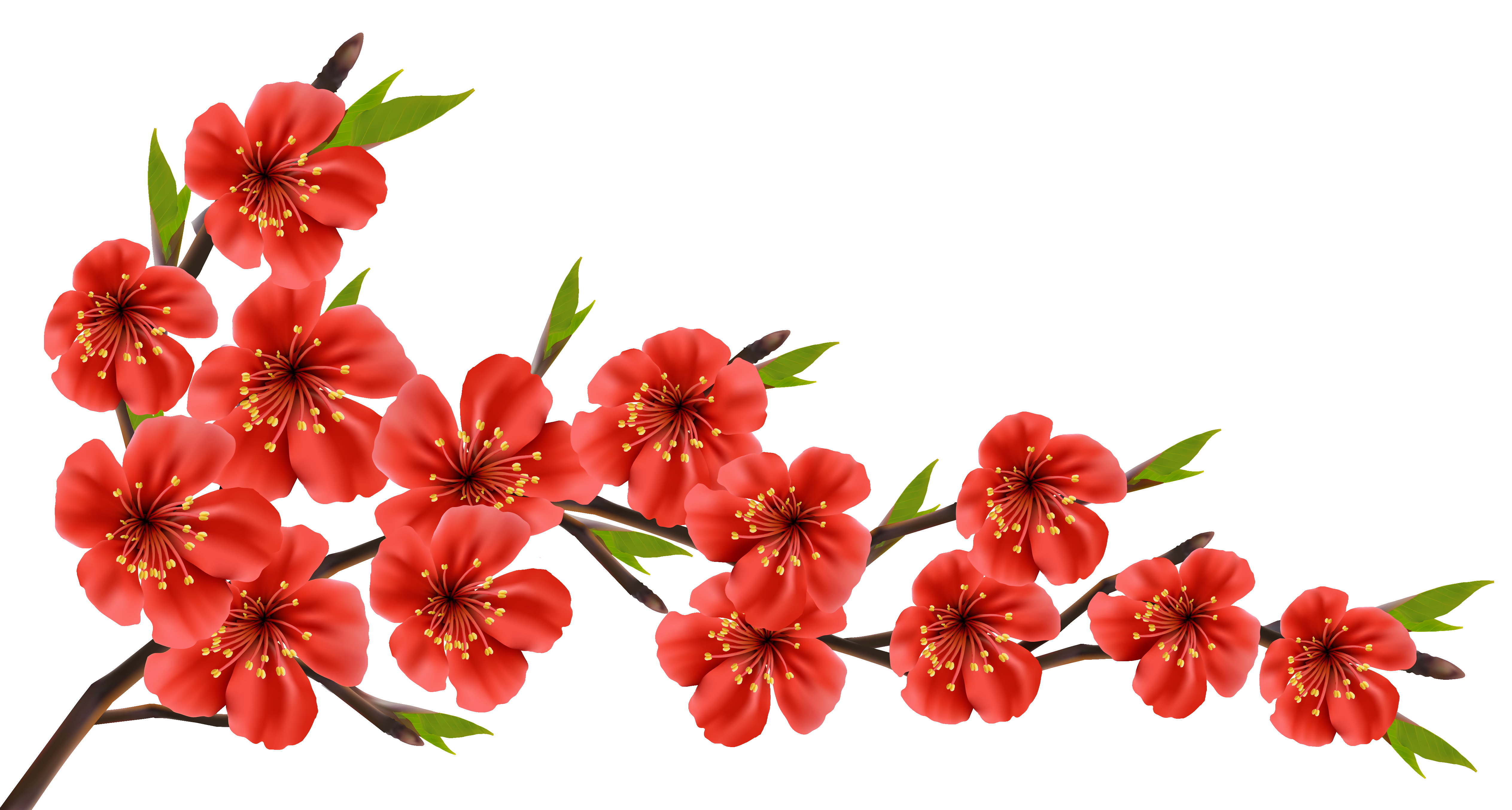 Red spring clipart image. Flower branch png
