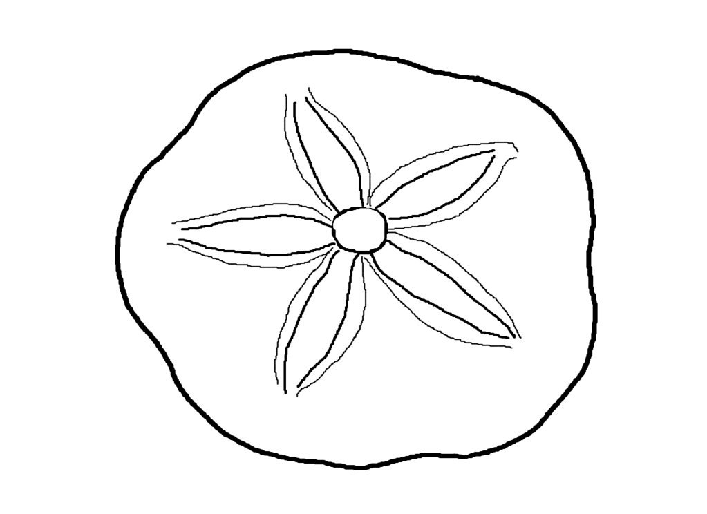 Shell clipart lineart. How to draw a