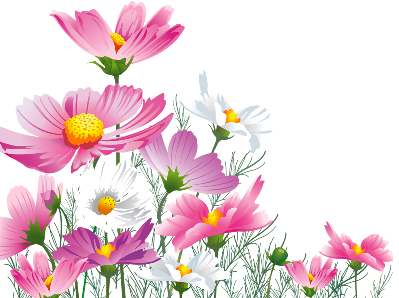 png pinterest images. Daffodil clipart trumpet flower