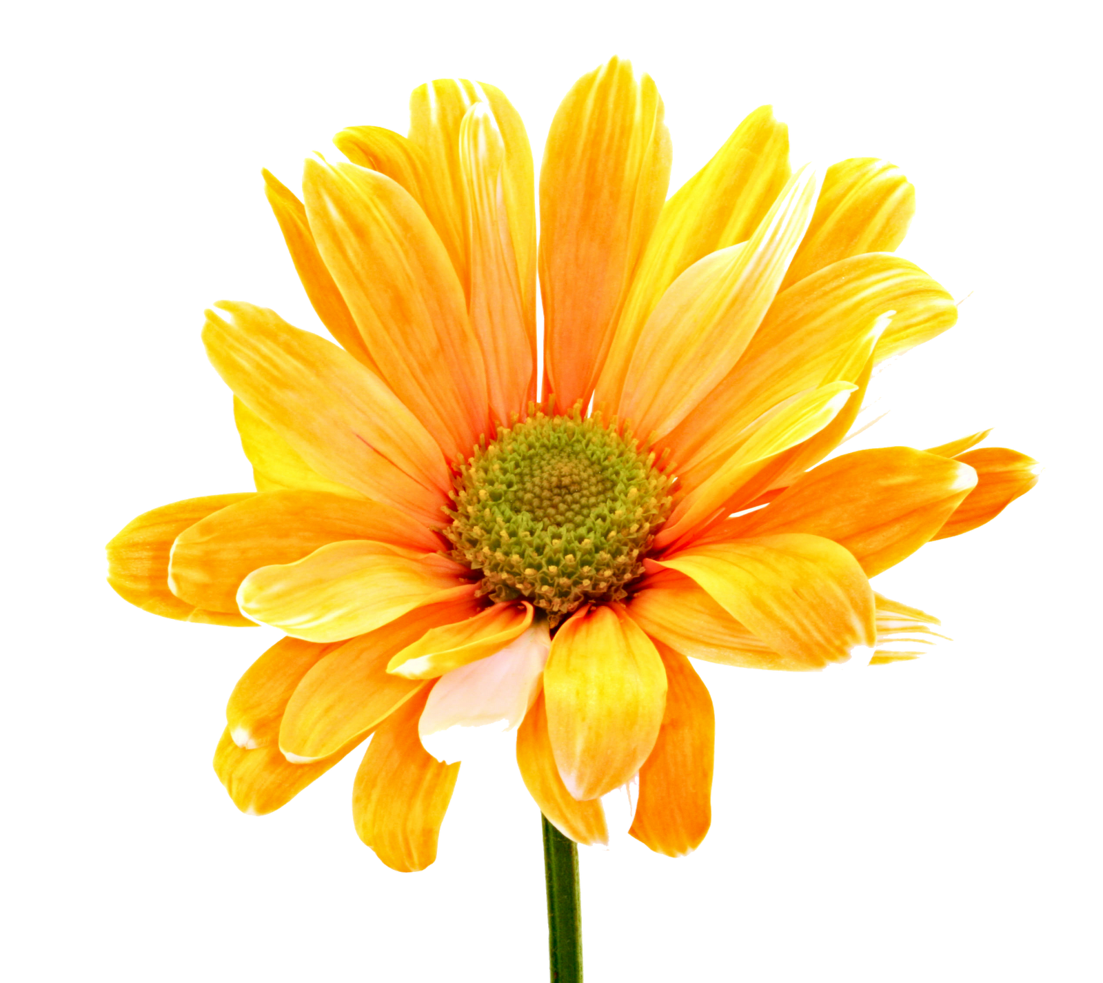 Yellow clipart colorful free. Daisy flower png