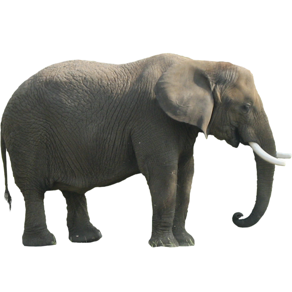 The in room . Coral clipart elephant
