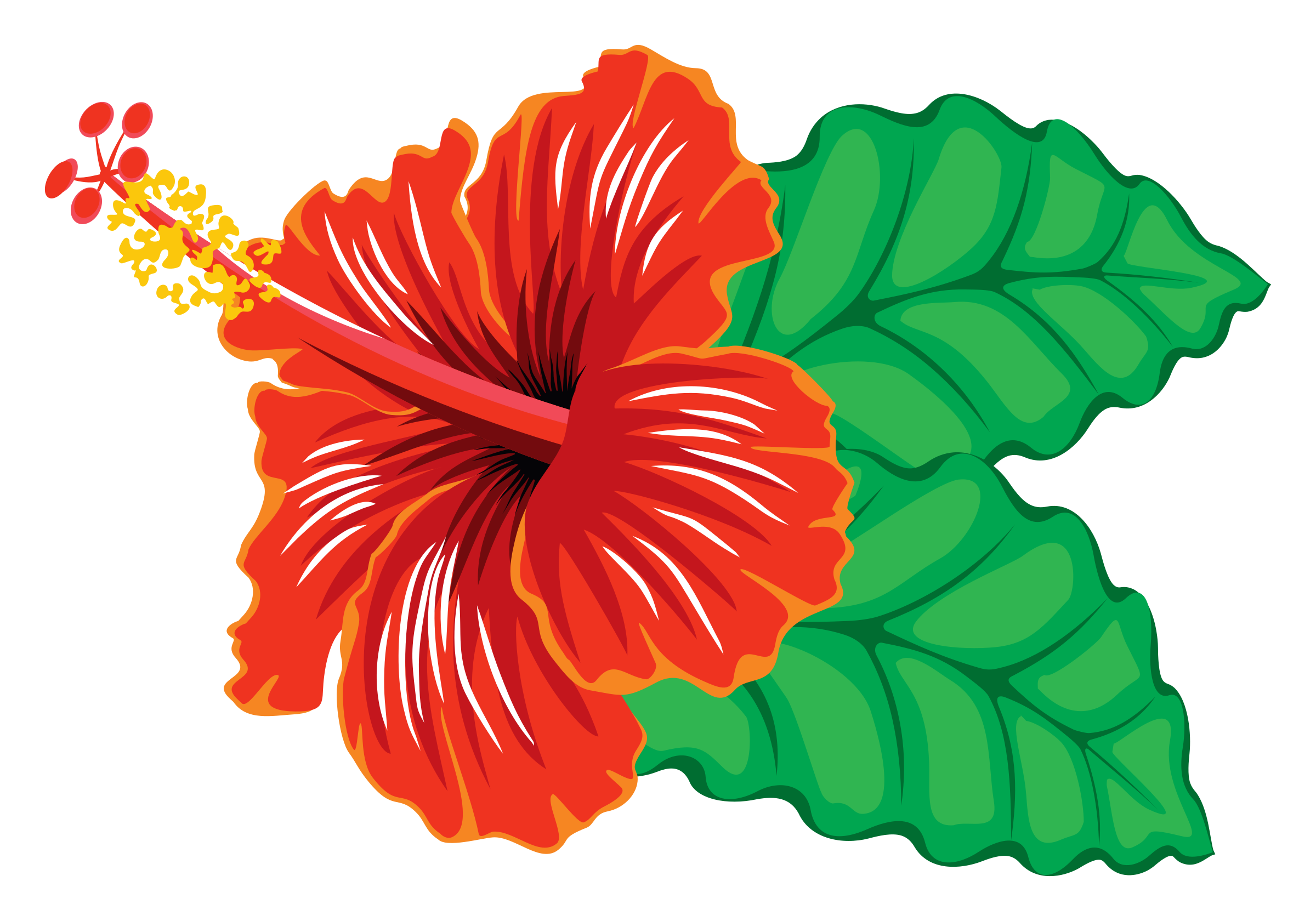 Hibiscus by floedelmann source. Drums clipart hawaiian