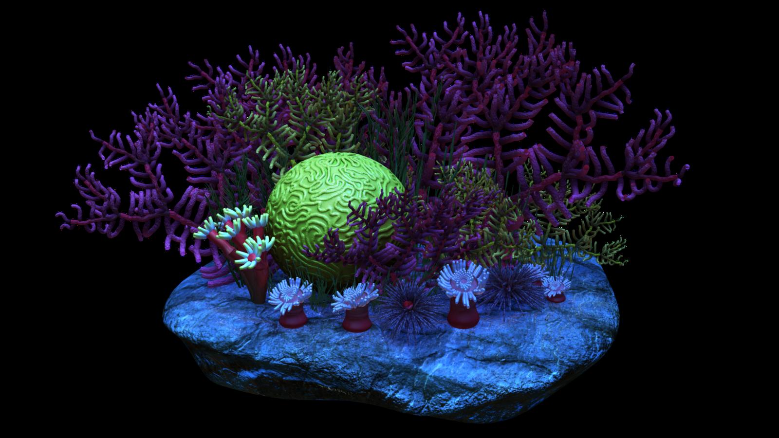 Orange clipart coral reef. Clip art transprent png