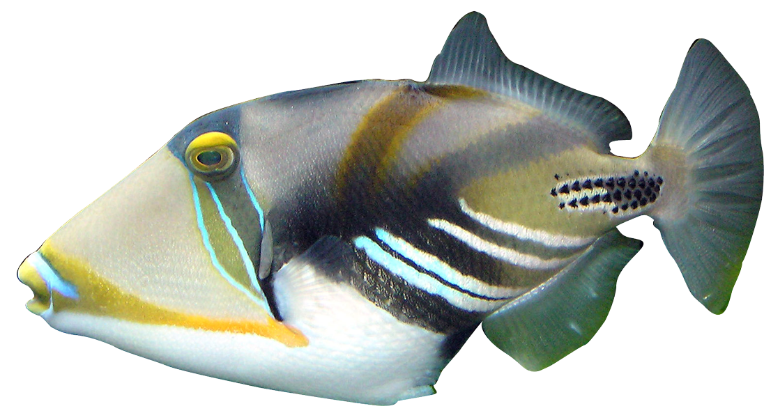 Fish clipart coral reef fish. Tropical downloads realistic from