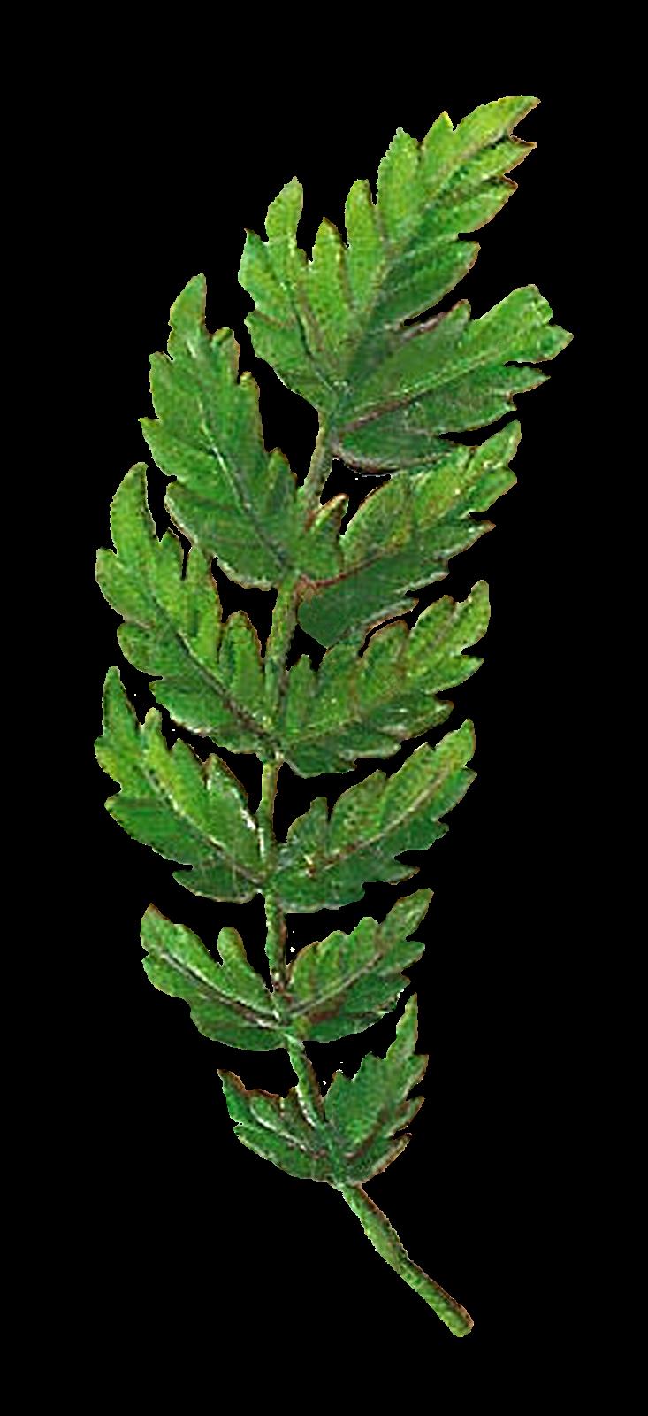 Hammer clipart pillow. Leaf botanical artwork digital