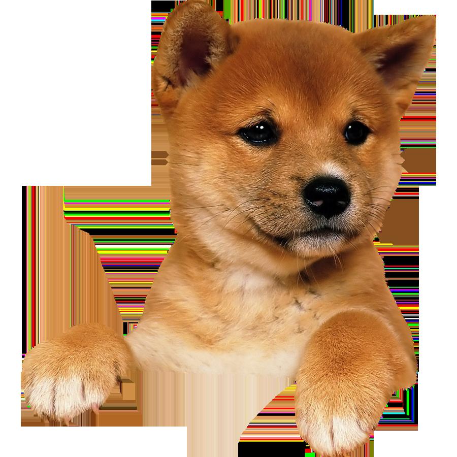 Corgi clipart transparent background. Dog png puppy image