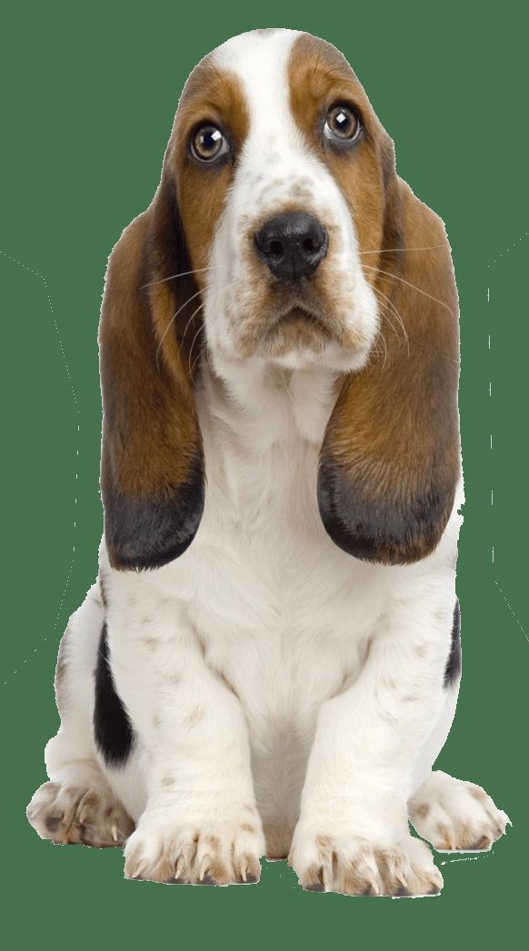 Corgi clipart transparent background. Dog png backgroundpluspngcom