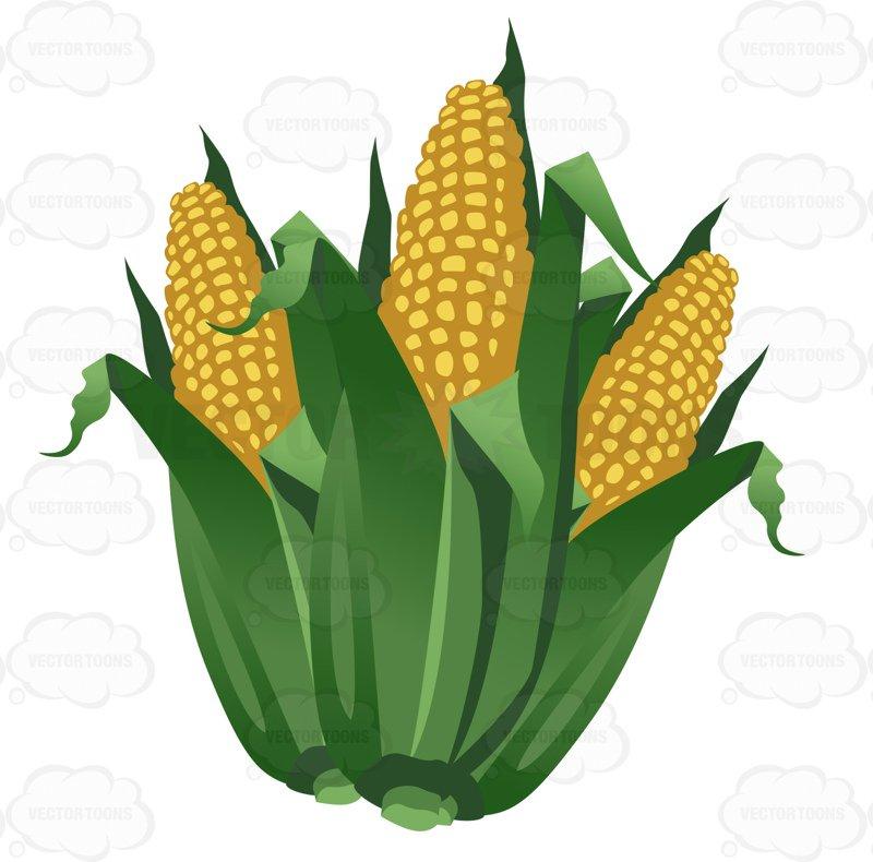 Jokingart com download free. Corn clipart