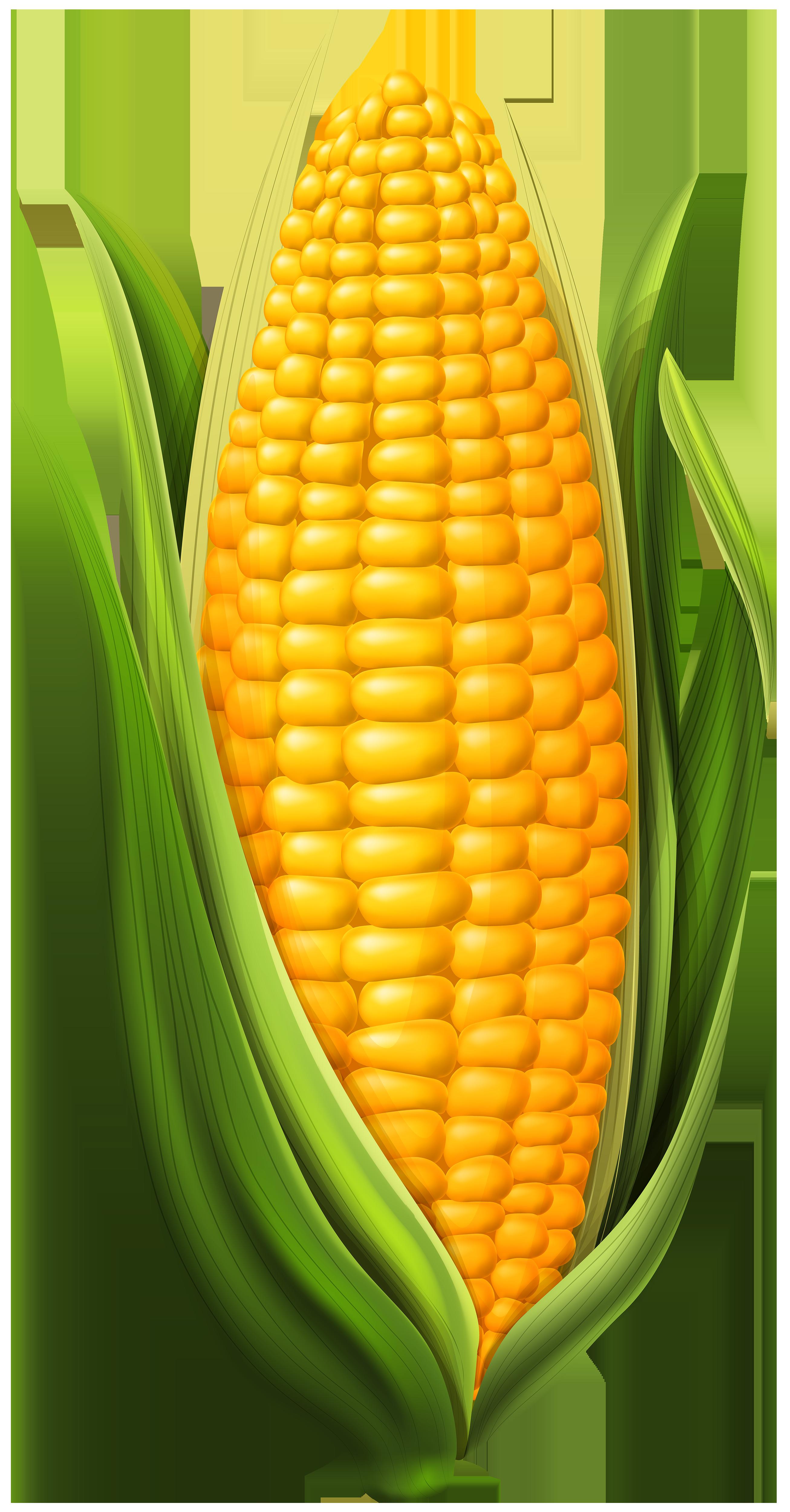 Corn clipart. Png clip art image