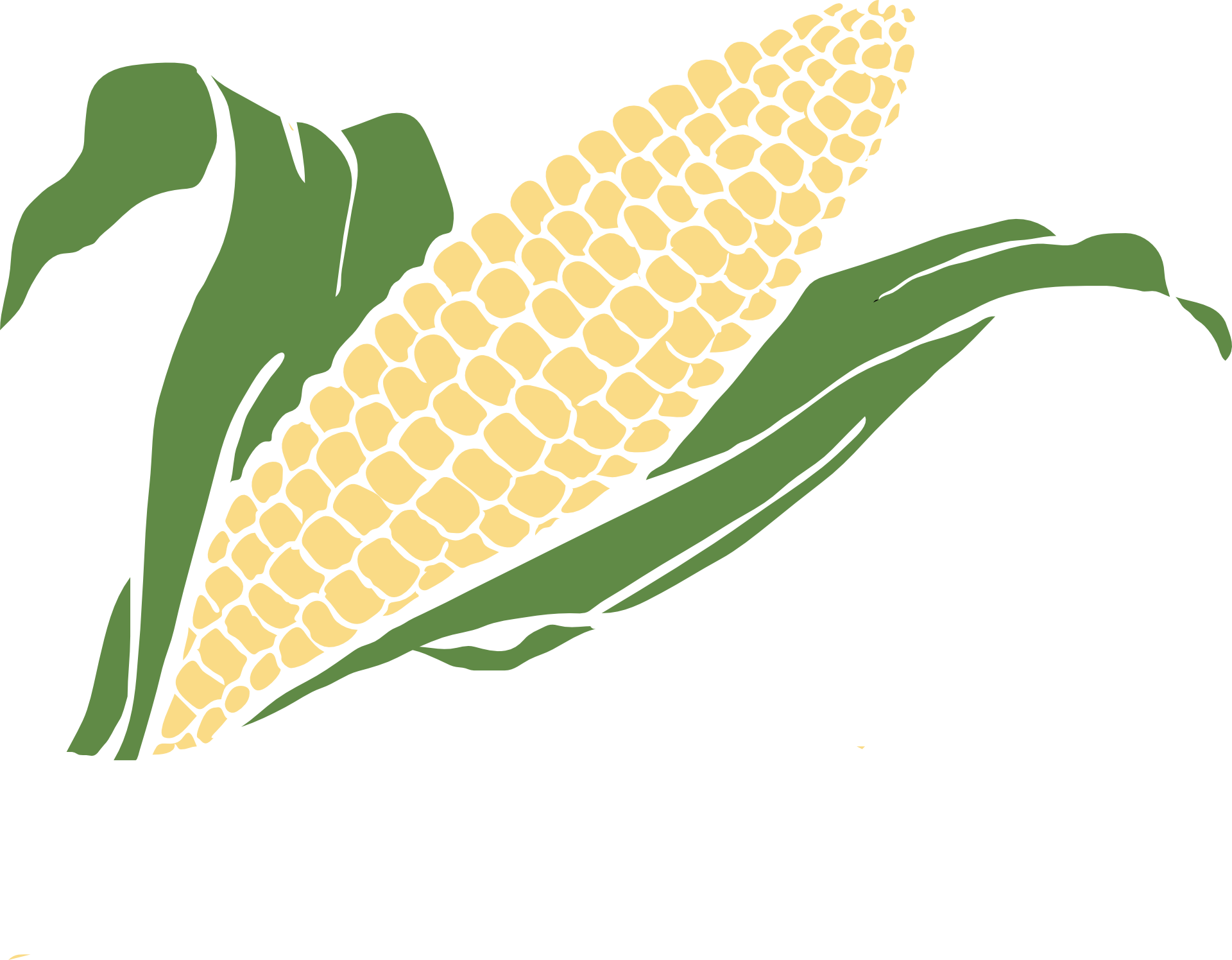 Of corn vegetable crop. Crops clipart drawing