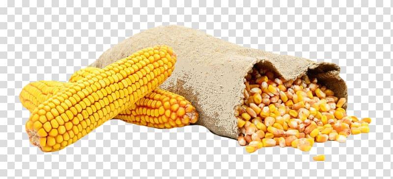 Waxy bag kernel sweet. Grains clipart corn grain