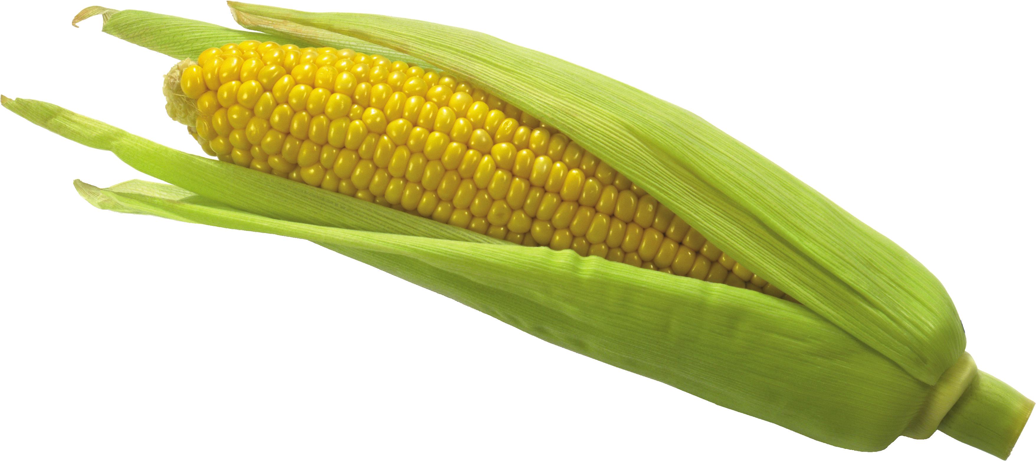 Flour clipart corn flour. Png image