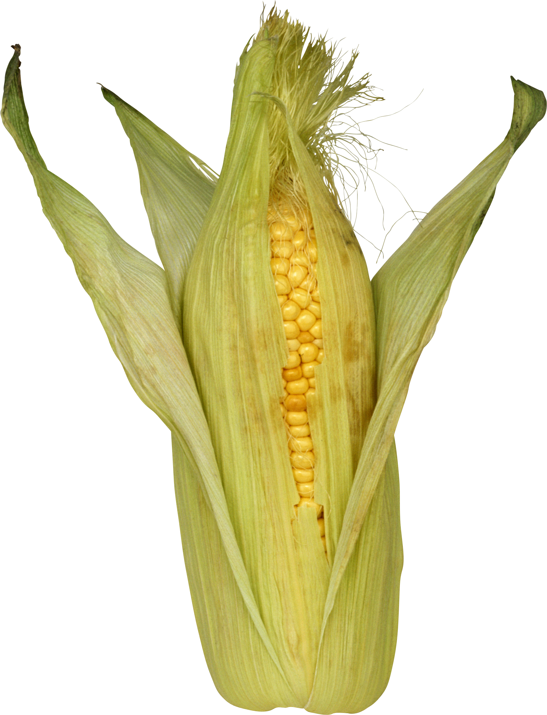 Png images download yellow. Fall clipart corn stalk