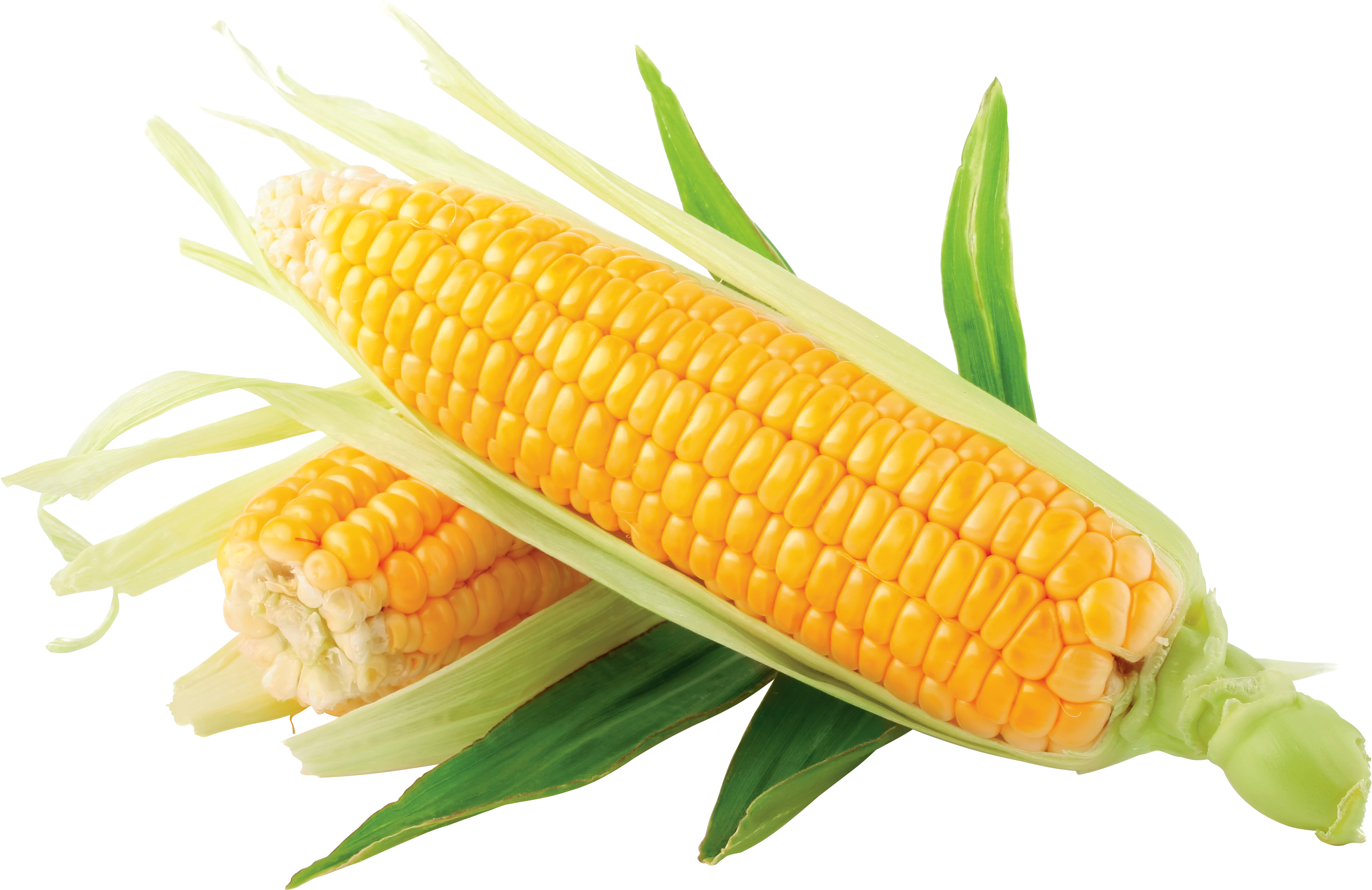 Grain clipart corn grain. Images download yellow clip