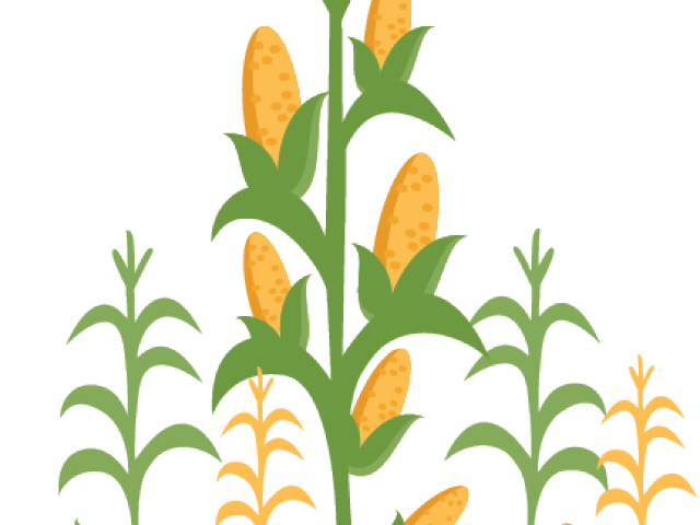 Clip art images gallery. Corn clipart field corn