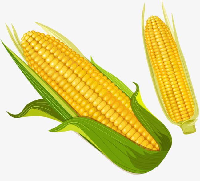 Corn clipart logo. Golden png food