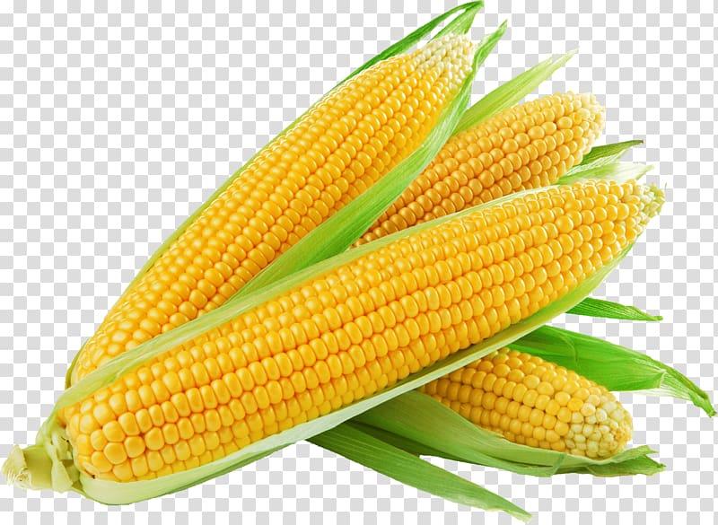 Corn clipart potato. Illustration on the cob
