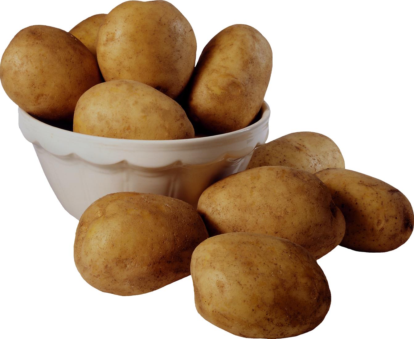 Png image purepng free. Potato clipart russet