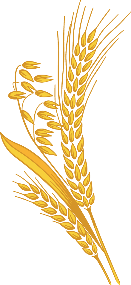 Grains harvest pencil and. Wheat clipart wheat crop