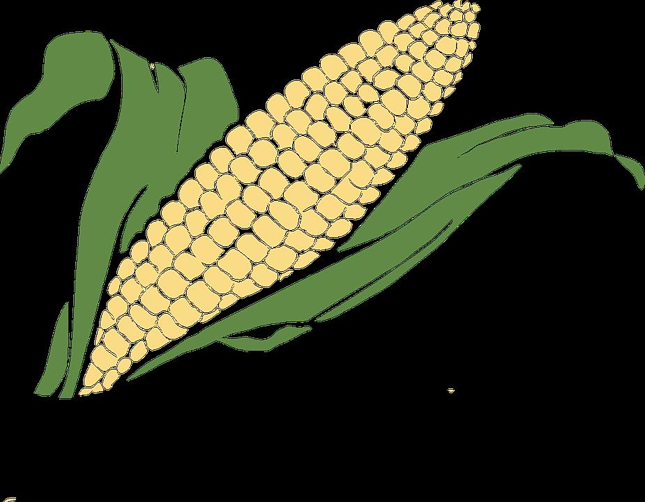 Grain clipart dietary fiber. Crops cliparts shop of