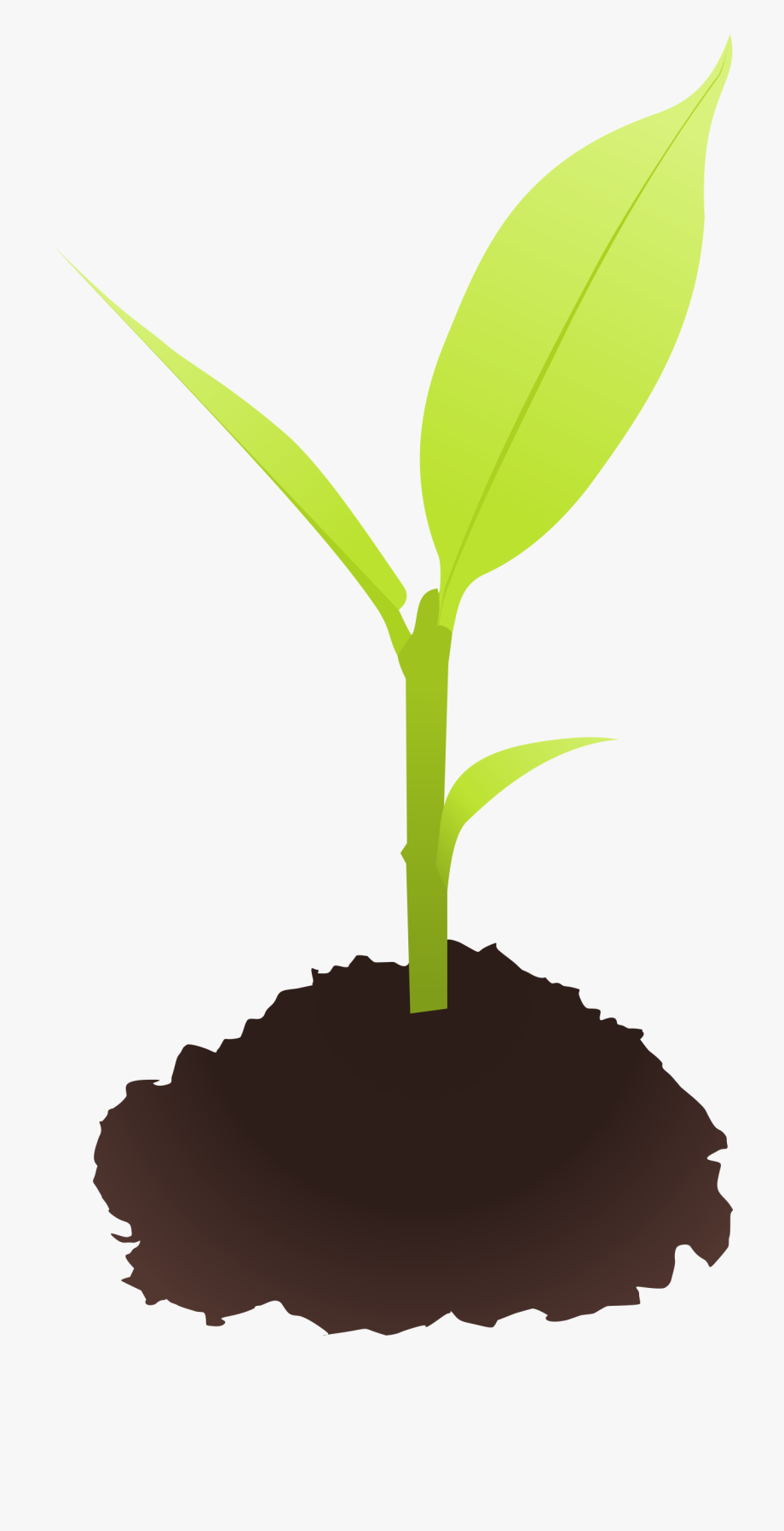 Seed small sprout free. Dirt clipart plant