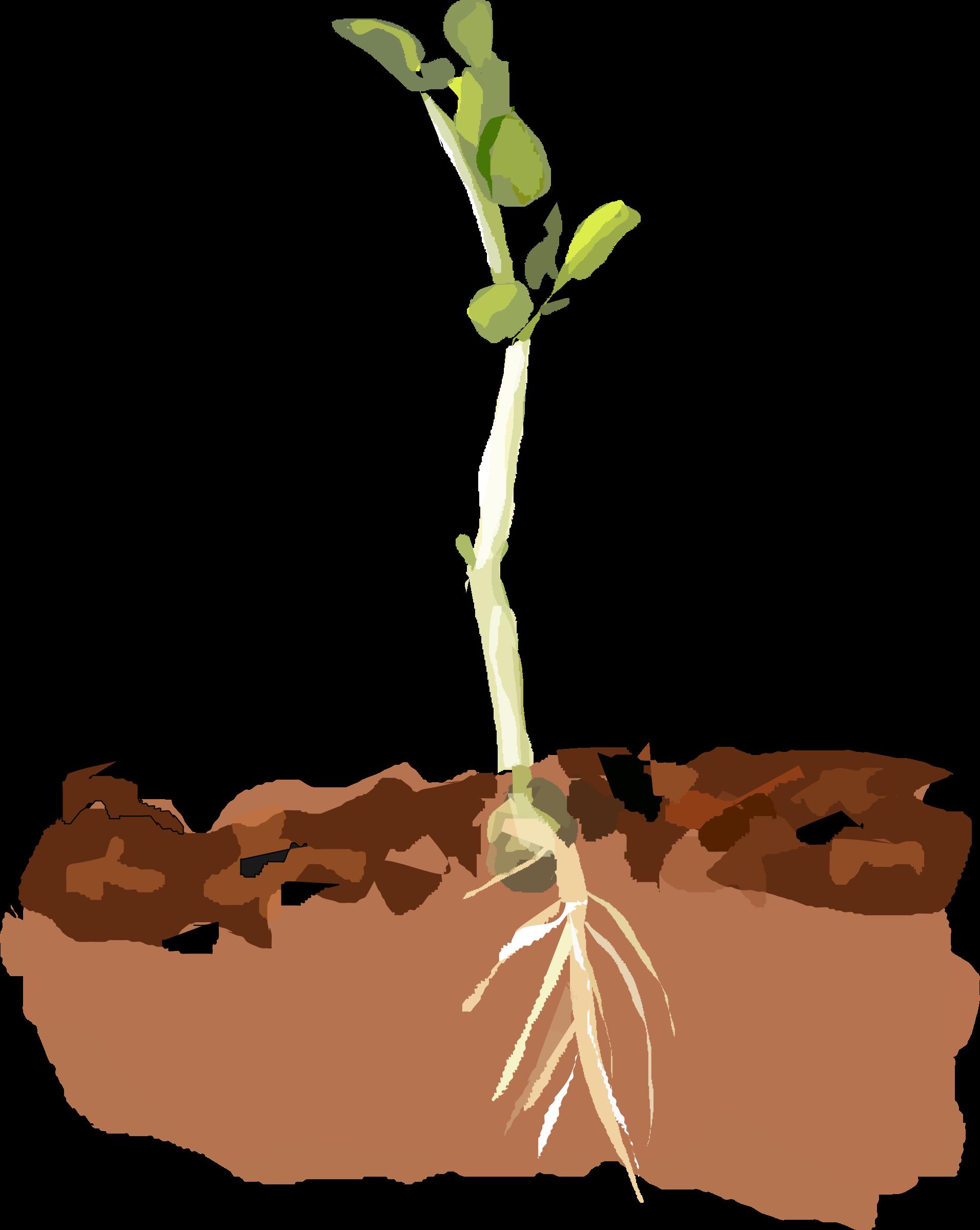 peas clipart clip art
