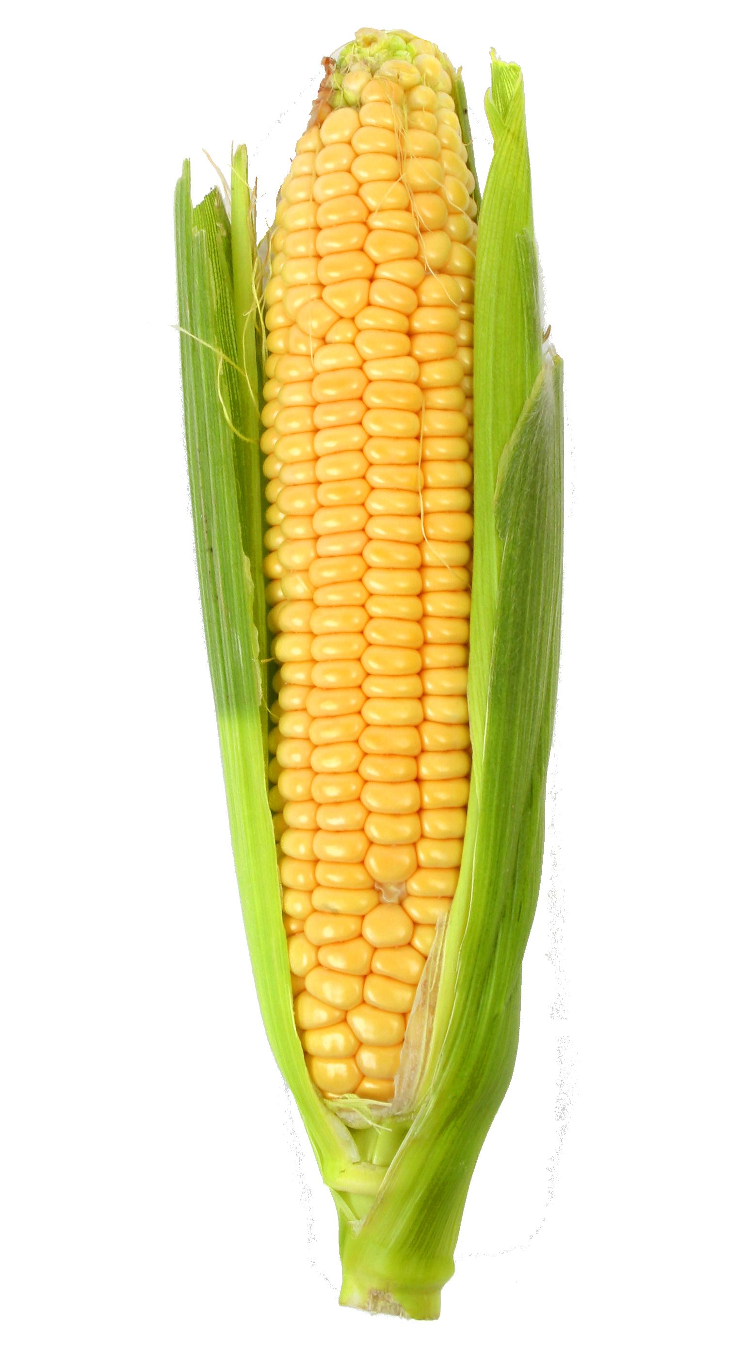 Grain clipart corn grain. Png image purepng free