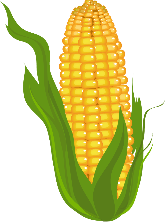 Corn prints pictures and. Clipart food agriculture