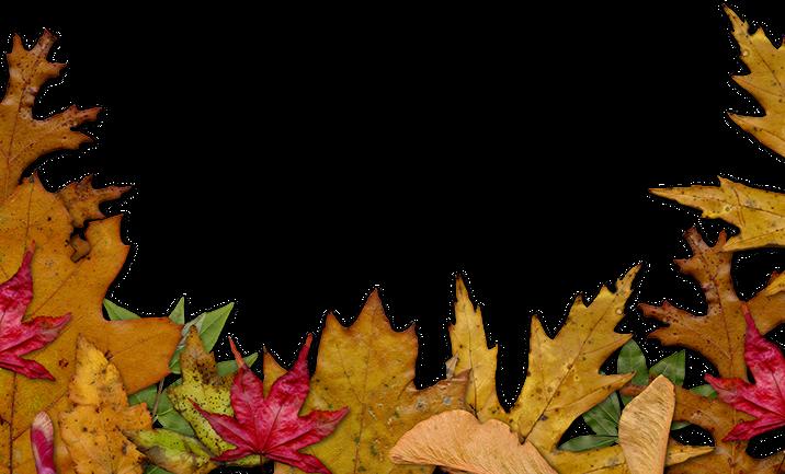 Older blogs old sol. Fall leaves and pumpkins border png