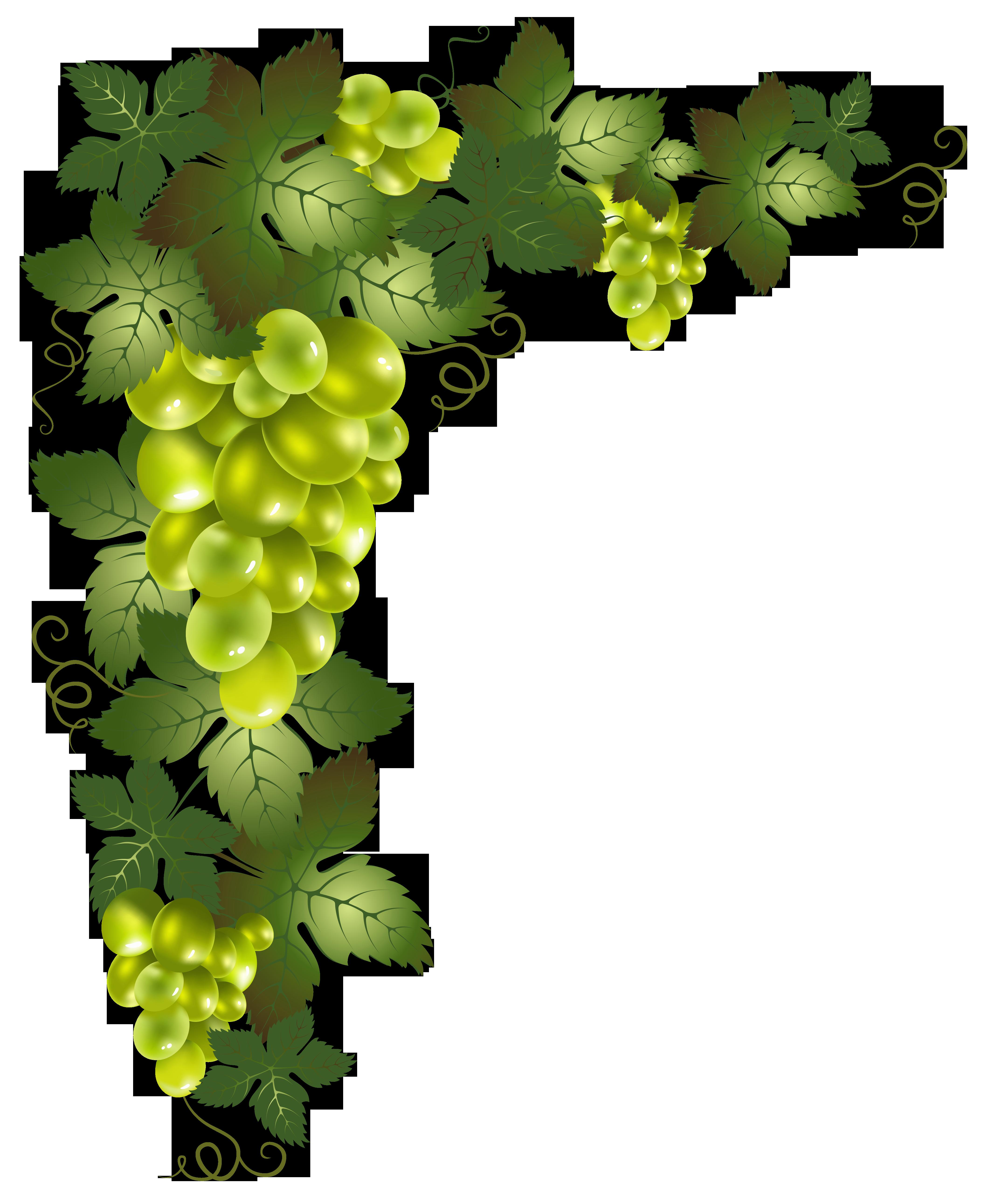 Grapes clipart border. Transparent vine decorative element