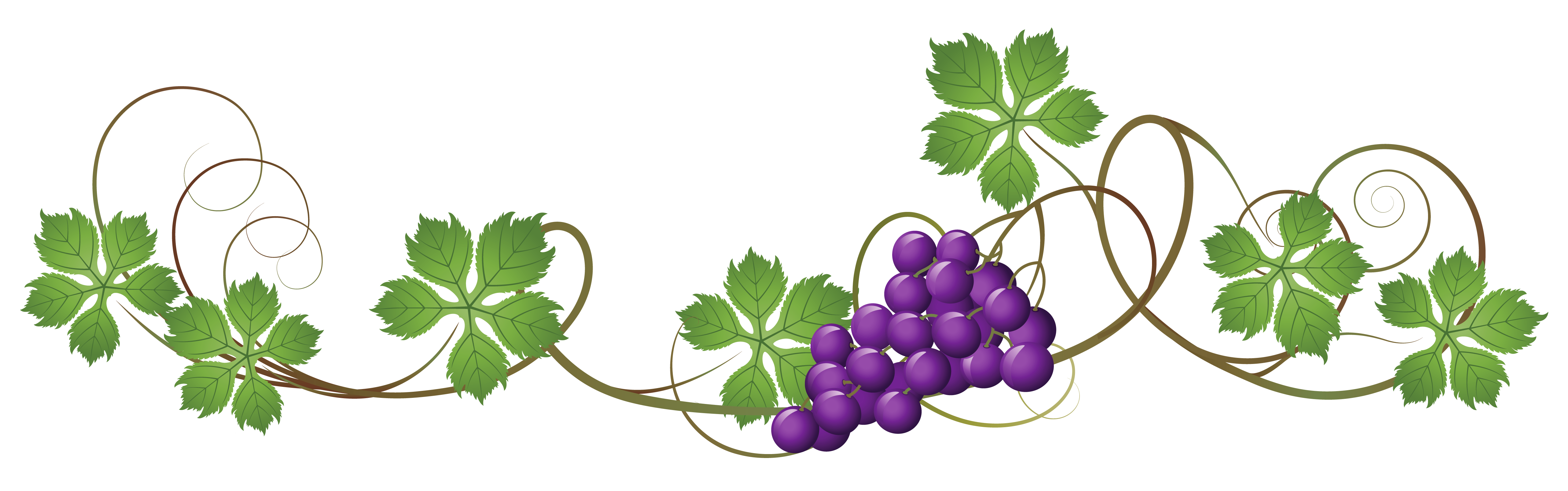 Grapes clipart happy. Vine decoration png picture