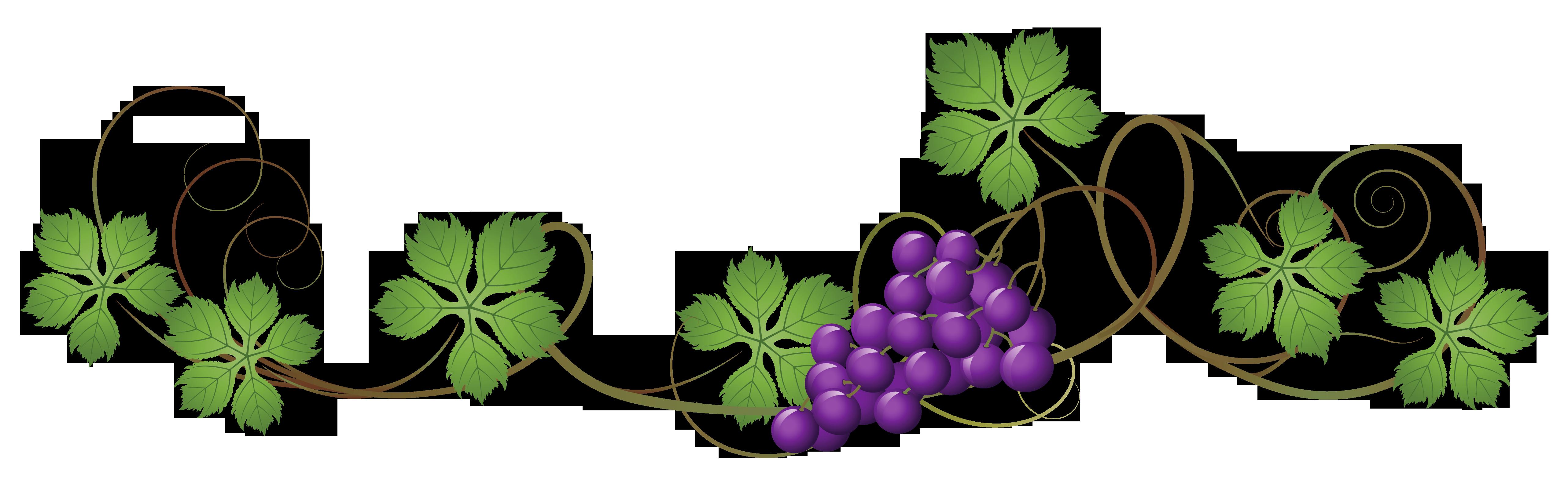 Vine decoration png picture. Vines clipart divider
