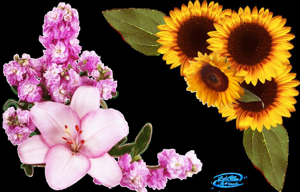 Flower corner png. Floral corners by lifeblue