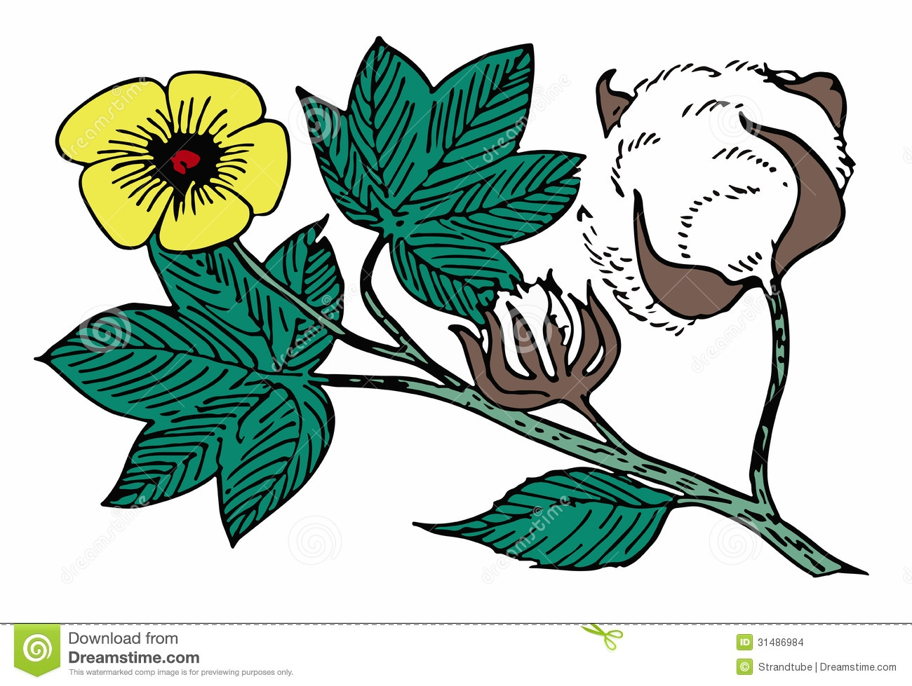 At getdrawings com free. Cotton clipart