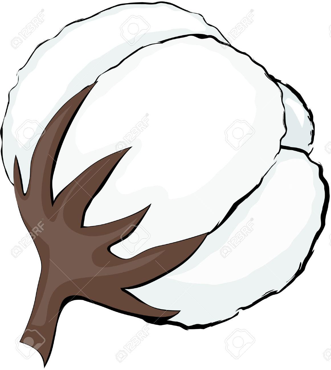 . Cotton clipart