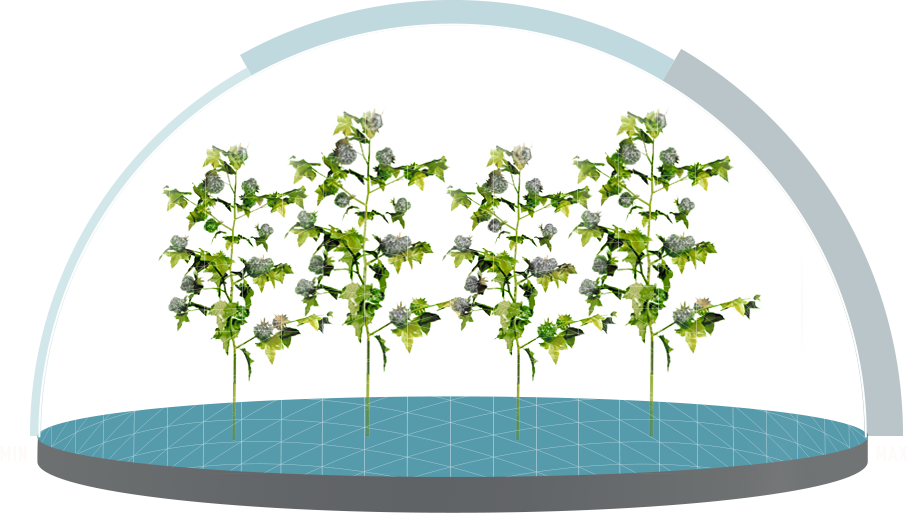 Bollgard xtendflex traits genuity. Cotton clipart cotton crop