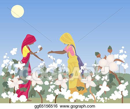 Cotton clipart cotton farm. Vector art picking eps