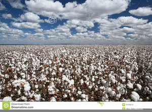 Free images at clker. Cotton clipart cotton field